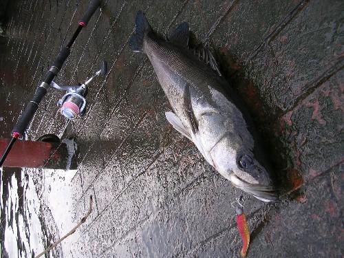 ワインド釣法イメージ