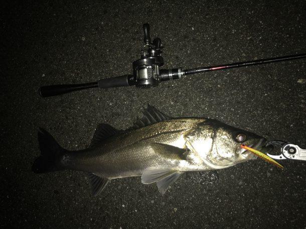 バチ抜けの時もテクトロで釣れる