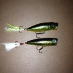 多摩川スモール魚影あり
