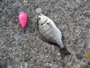 飛ばし浮きは小物釣りに重要なアイテム