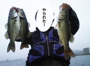 琵琶湖で狙うGWバス