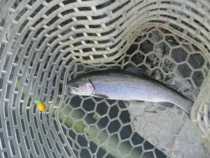 プロップで釣ったニジマス