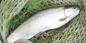 管理釣り場のイメージ