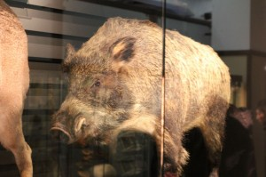 私の干支猪