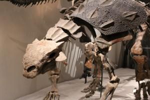 恐竜の骨格