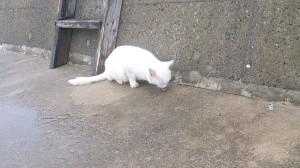 アイドル並みの猫