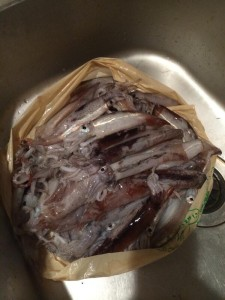 大漁のムギイカ