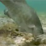 【YouTube紹介】ヒットシーン丸わかりなバスルアーの水中映像
