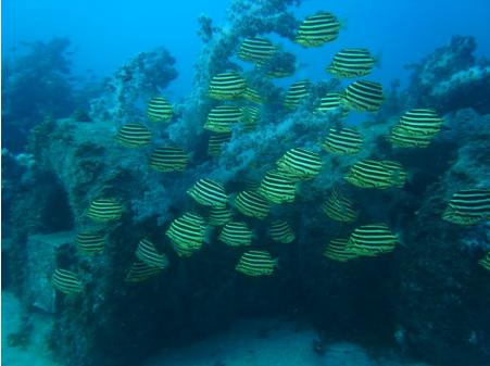 タイヤの漁礁
