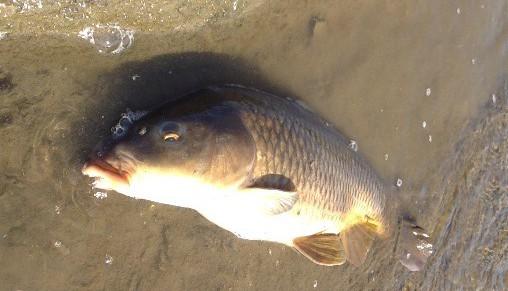 鯉をルアーで釣る方法