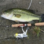 最新ソリッドティップバスロッド・コルキッシュが届いたので試し釣りへ