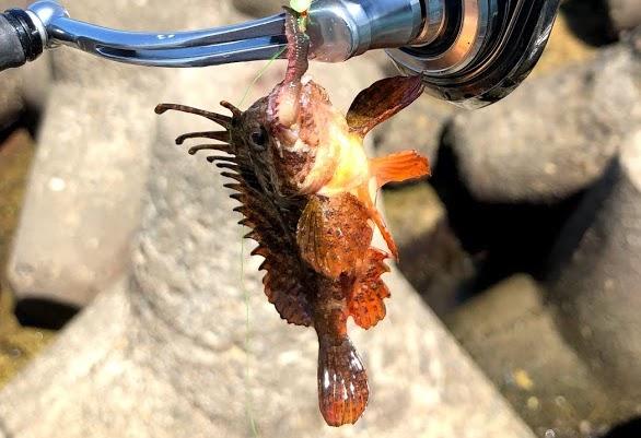 キングオブ毒魚と呼んでいい毒魚