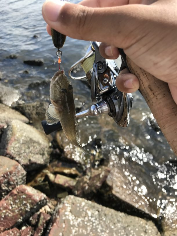 ハゼクラで釣った魚