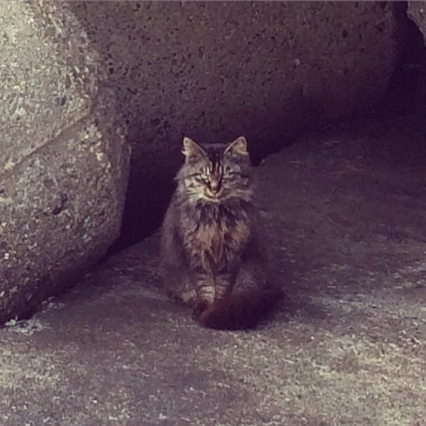 鎮座する猫