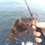 楽しすぎる根魚大漁日記