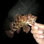 淡路島釣行根魚編、アジングみたいなメバリング