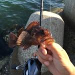ベイトフィネスで穴釣りは最高に楽しい