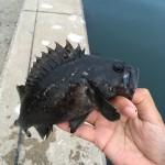 函館の港で釣りしてみた