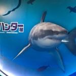 上野の国立科学博物館でやってる「海のハンター展」を見てきた