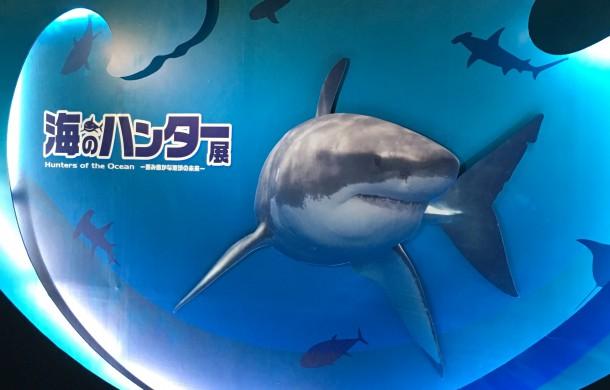 海のハンター展イメージ