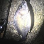 スピニングロッドにベイトリールをつけて釣るランカーキビレ