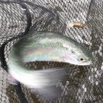 琵琶湖の近くの管理釣り場アクアヘブンへ行ってきた