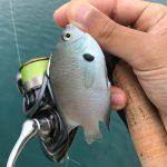 【初沖縄釣行記】熱帯魚は釣れるのか?