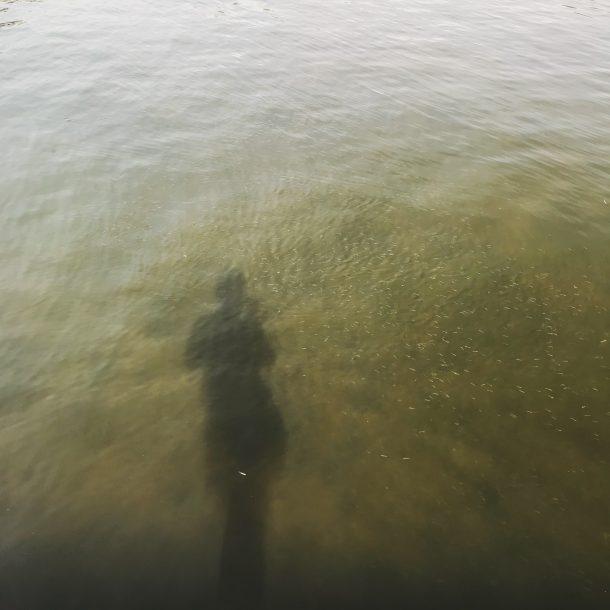武庫川のハク