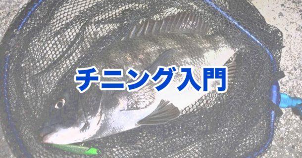 チヌ釣り入門