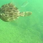 淡路島の海中映像!あなたは何種類の魚を見つけられるか?