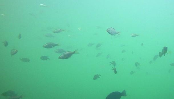 漁港の水中
