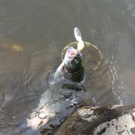 管釣りシーズン開始!フィッシュオン王禅寺にてトラウト大量ゲット!