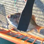 平磯で寒風激流投釣り