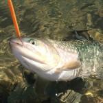 管釣りトラウトをおすすめする5つの理由