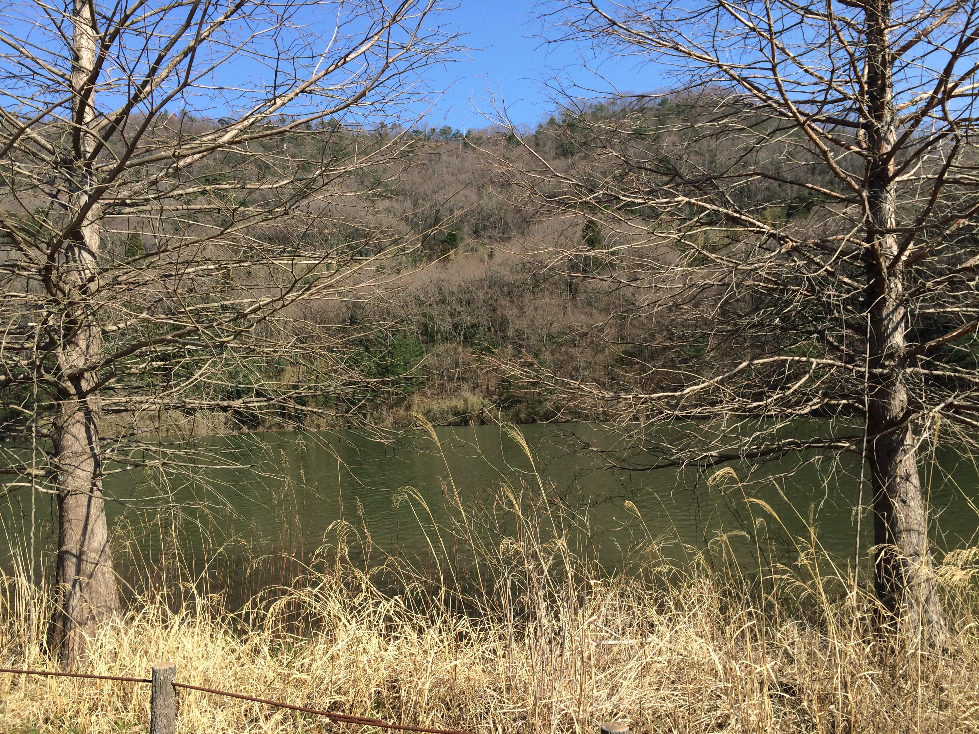 ダム湖の景色