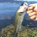 快晴・無風・激渋琵琶湖を攻略せよ