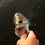 【釣り場紹介シリーズ】よく行く琵琶湖の陸っぱり出来る釣り場【バス釣り】