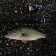 和邇川でバス釣りイメージ