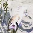 朽木渓流魚センターイメージ