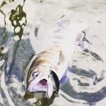 釣り人のテーマパークや!朽木渓流魚センターでトラウトフィッシング!