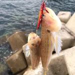 釣り人にしか食べられない魚