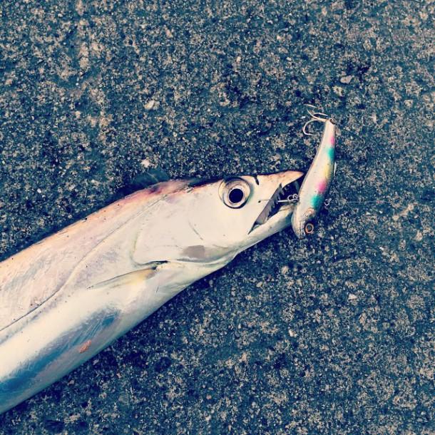 バイブレーションで釣ったタチウオ