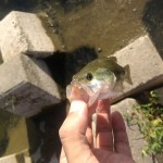 夏季休暇シリーズ今日の釣り
