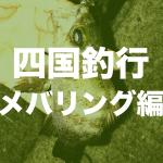 【四国遠征】今治で夜釣りはメバル入れ食い【釣旅】