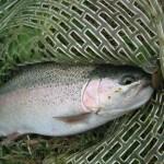 魚の小さな開成フォレストスプリングス