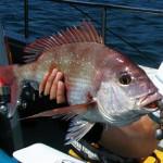 多種多様な鯛の釣り方まとめ