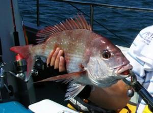 タイラバで真鯛