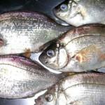 手についた魚の匂いを取る方法